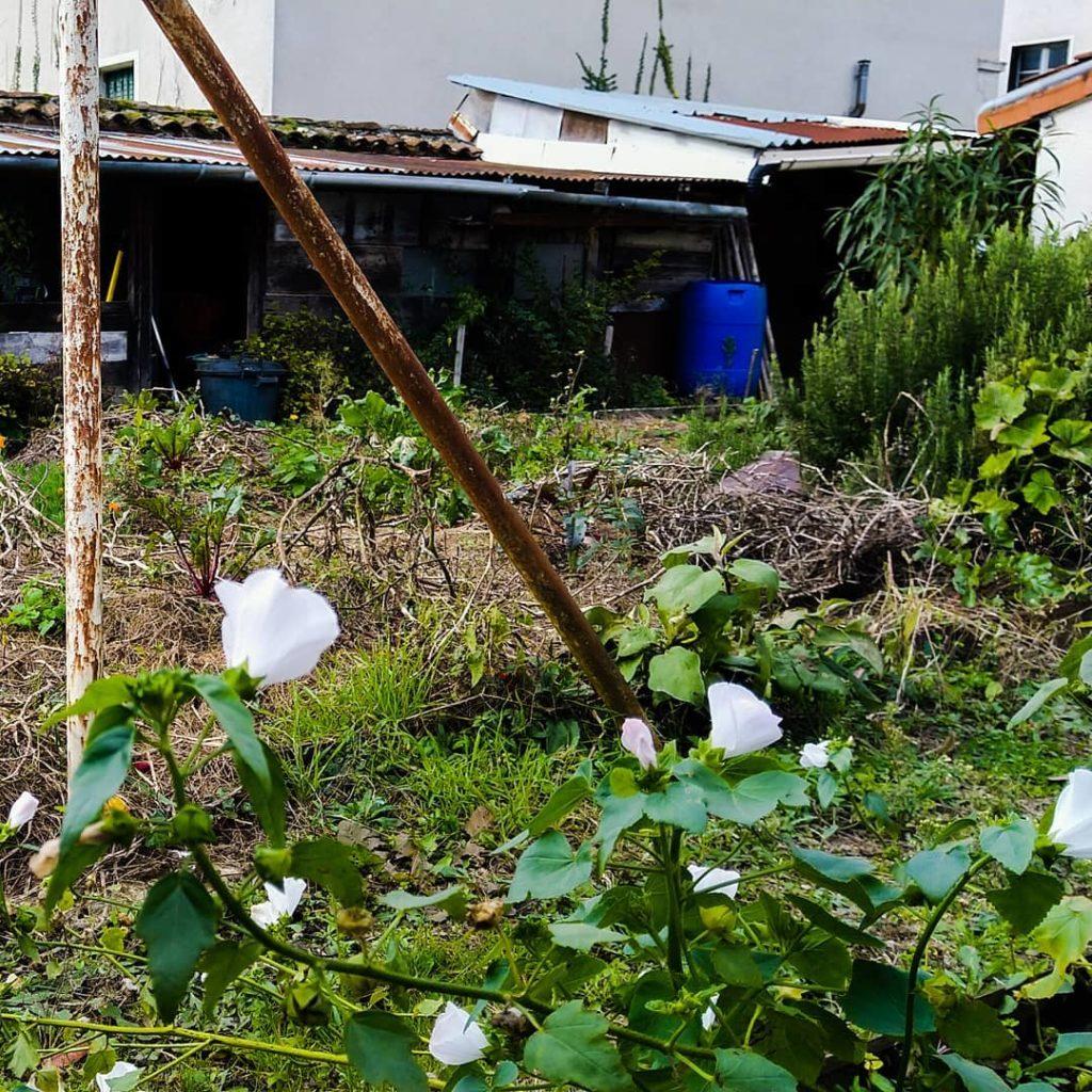Jardin partagé le potager minimaliste