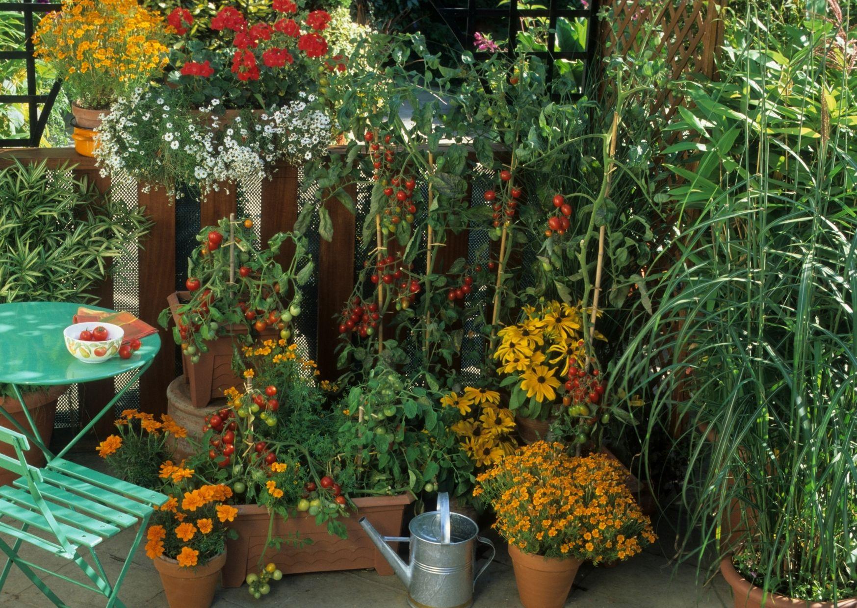 Que planter dans un balcon ?