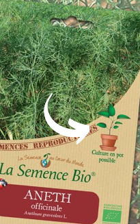 La semence bio, culture en pot possible