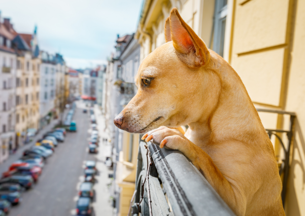Observer et identifier l'exposition de son balcon