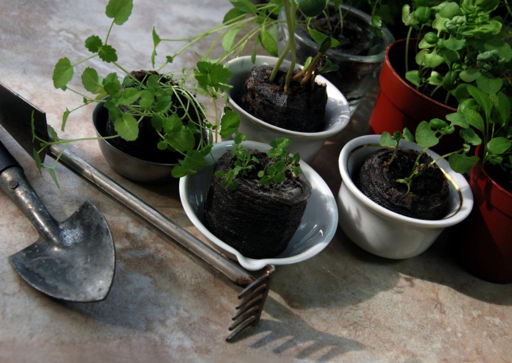 Tout les plantes ne se cultivent pas toute l'année