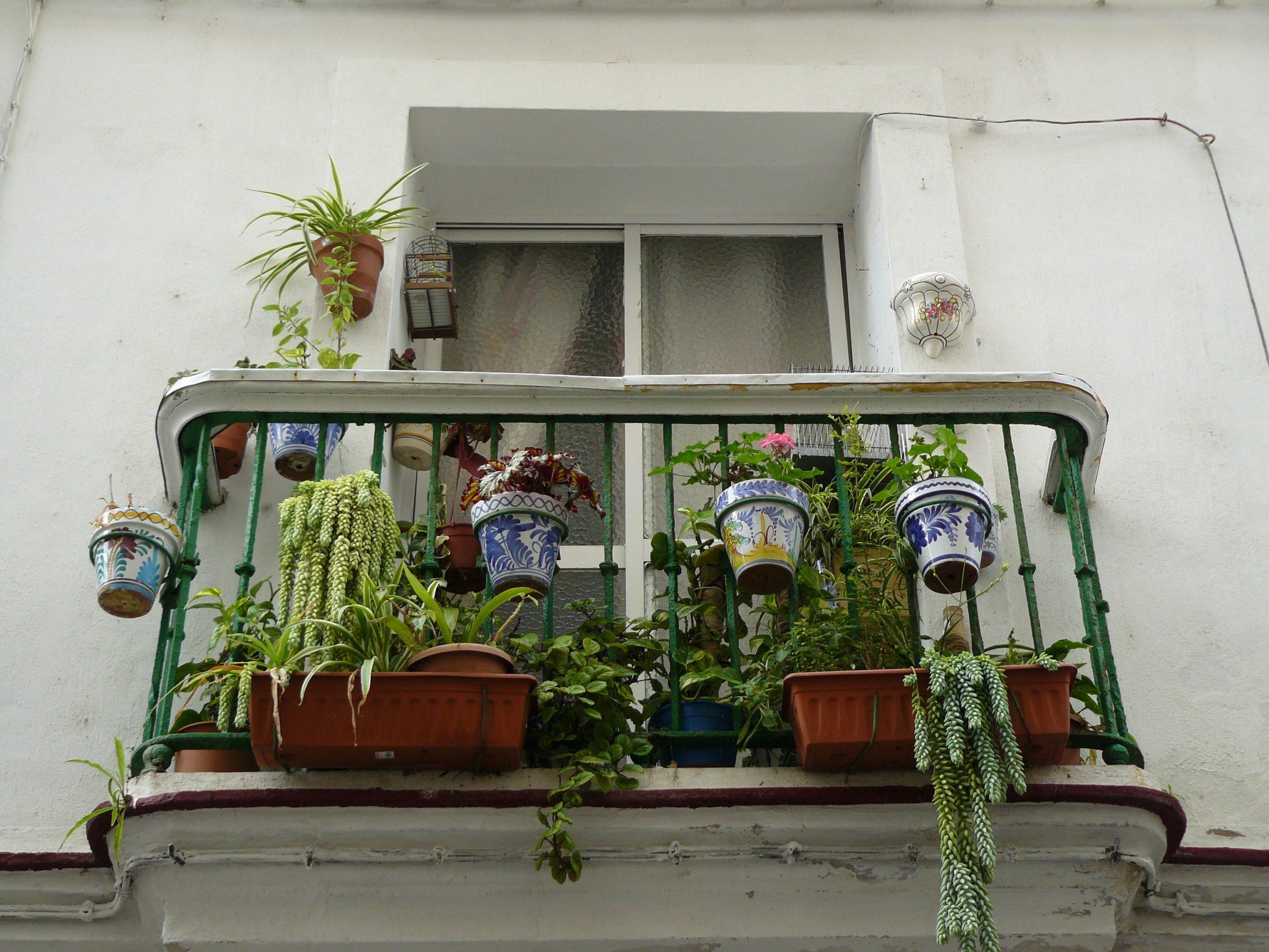 7 choses à savoir avant de lancer un potager sur son balcon